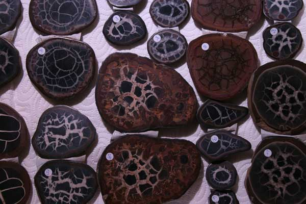 Septarien aus Marokko
